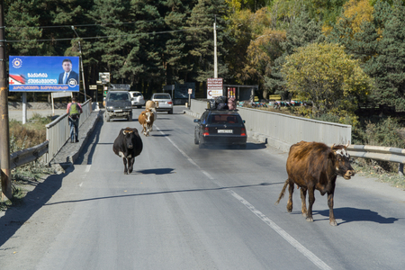 STEPANTSMINDA, GEORGIA - OCT 17, 2016: The bridge, on which there are people, cows, riding cars