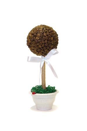 arbol de cafe: árbol de café sobre un fondo blanco