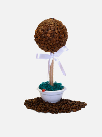 coffee tree: coffee tree on a white background  and spilling grain