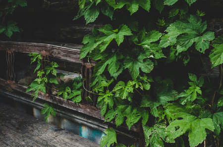 Simple wooden bench by a log wall shrouded in greenery