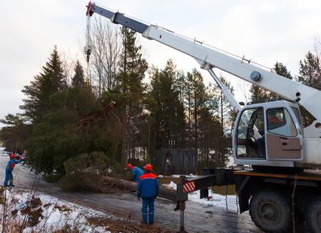 Rescue workers removed the tree felled by Hurricane using a crane photo