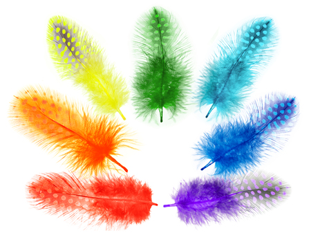 Guinea fowl feathers are painted in bright colors of a rainbow isolated on white background. collage Stock Photo - 25020053