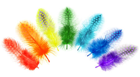 Guinea fowl feathers are painted in bright colors of a rainbow isolated on white background. collage  photo