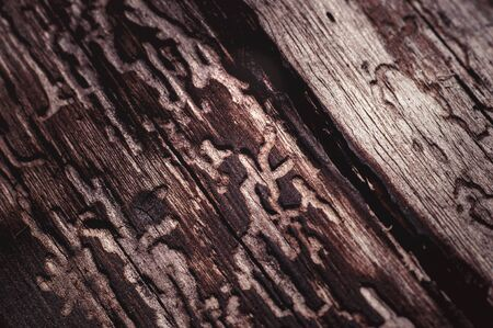 aged: Aged wood texture