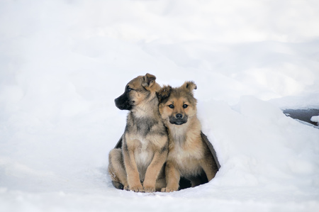 homeless puppies clung to each other to keep warm. Problems stray animals survive the winter.