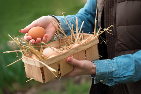 A hand holding a fresh chicken egg and organic eggs in a basket with nest straw, soft focus