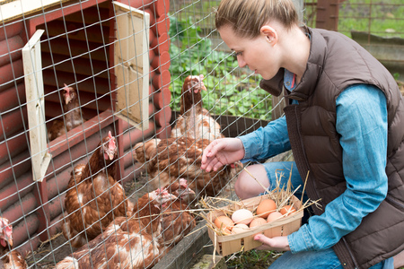 a woman gathering fresh eggs into basket at hen farm in countryside