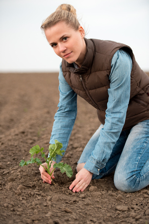 The woman cultivates Canola seedlings in spring. Rapeseed sprout on plant field