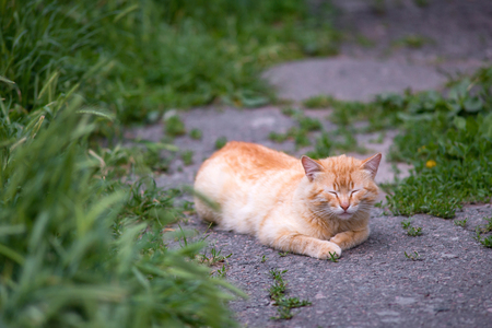 photo of red cat with closed eyes lying outdoors