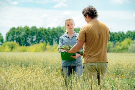 Male and female agronomist have a meeting at the rye field and take down notes Foto de archivo