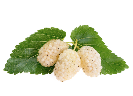 Mulberry fruit with leaves, isolated on white background. White mulberry