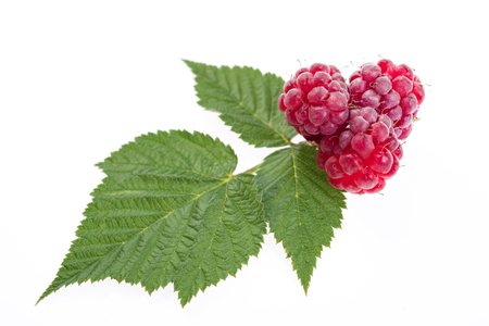 Ripe raspberry with leaves isolated on white background close-up