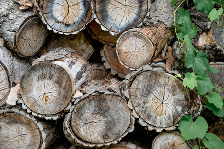 Close up of chopped firewood. Firewood prepared for winter, wood logs Stock Photo