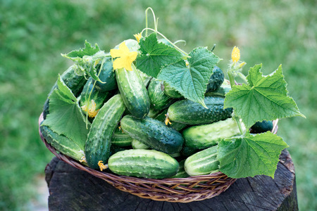 Fresh cucumbers with flowers and leaves in basket, on stump
