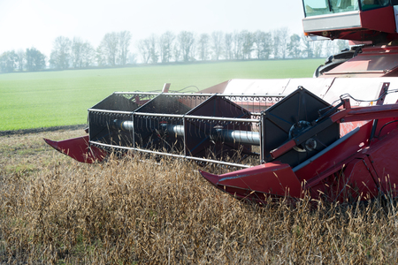 cutter bar of a combine harvester harvesting a field of soybean in a closeup view