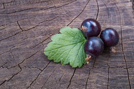 black currant with life close-up on wooden background