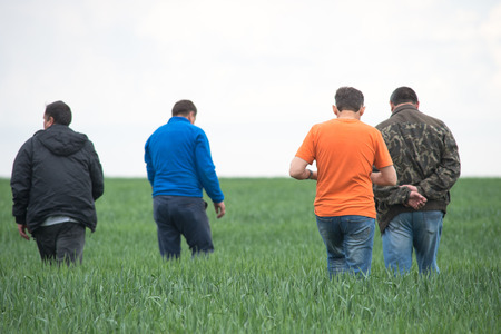 agronomists go around the field with wheat. Back view. Spring field with growing green wheat