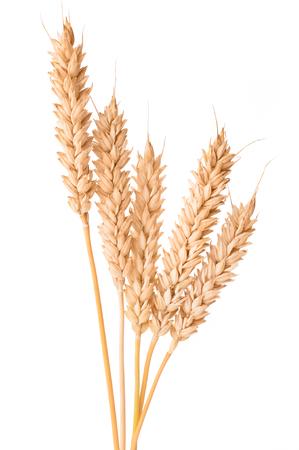Ripe ears of wheat isolated on white background Reklamní fotografie