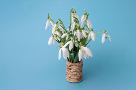beautiful bouquet of snowdrops isolated on blue background
