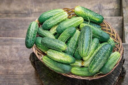 Basket with cucumbers. Autumn harvesting. Summer harvest. Blanks for the winter. Basket of vegetables. Fresh cucumbers