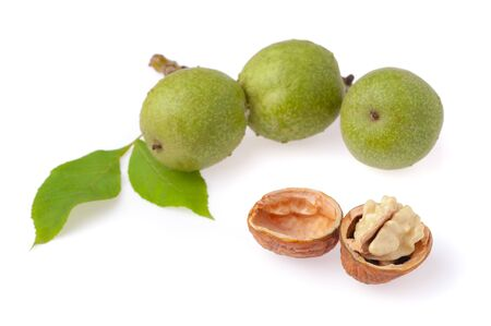 Green walnuts on a twig with leaves and opened walnut on a white background. Фото со стока