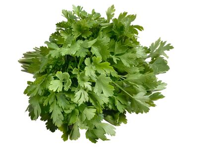 green fresh parsley isolated on white background. parsley bunch