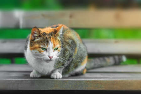 A homeless white-red cat sits on a bench against a background of green grass