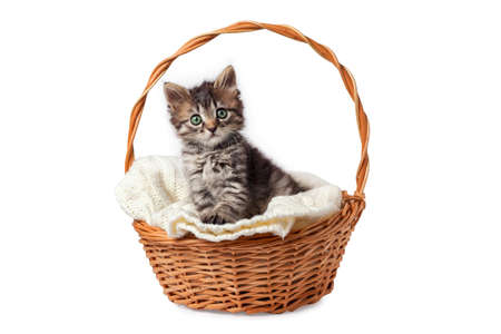 Cute striped kitten sits in a basket on a knitted bedding. Isolated on a white background.