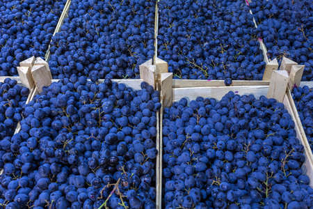 Ripe grapes in wooden boxes. Local produce at the autumn farmers' market. High quality photo
