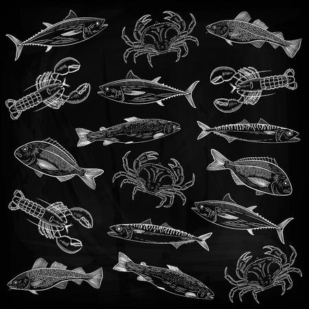 Een set van populaire zeevis, krabben, kreeften. Zalm, tonijn, kabeljauw, makreel, dorado, kreeft, krab. Tekening krijt op een schoolbord, vectorillustratie.