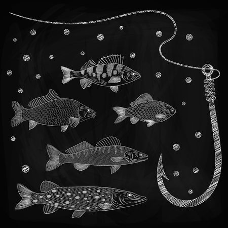 Illustration on a river fish theme. Set of pike, pikeperch, carp, crucian carp, perch, fishing line and fish hook. Sketch, chalk drawing on blackboard, vector illustration