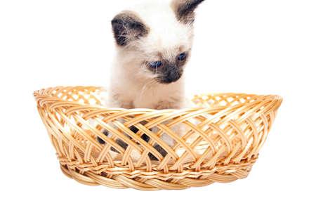fluffy kitten with blue eyes in  straw basket photo
