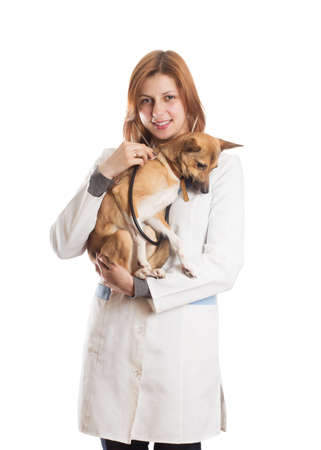 diagnoses: veterinarian diagnoses the puppy on a white background isolated