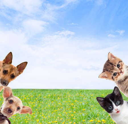 surprised dog:  pets on a background of green grass Stock Photo
