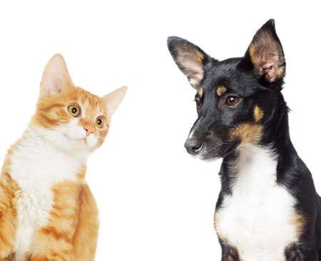 cat eye: kitten and puppy watching