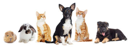 Kitten and Puppy looking on white background Stock Photo
