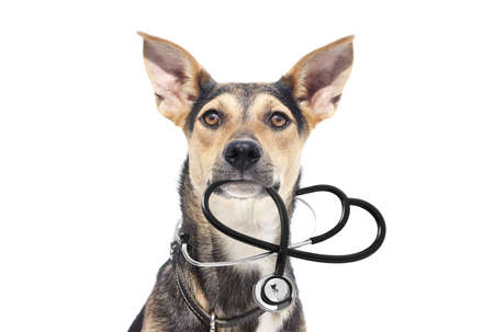 Dog and stethoscope on a white background 版權商用圖片