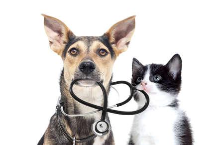 Hund und eine Katze und ein Stethoskop Standard-Bild