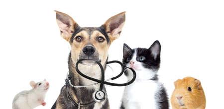 hond en een kat en een stethoscoop