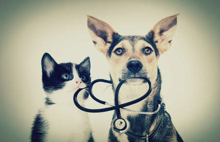 profesional: dog and a cat and a stethoscope