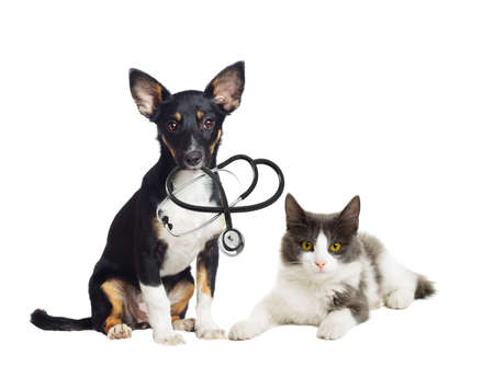 Puppy and kitten vet on a white background