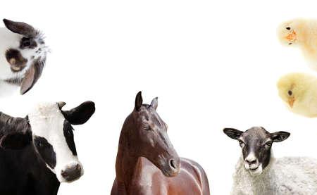 animales granja: conjunto de animales de granja Foto de archivo