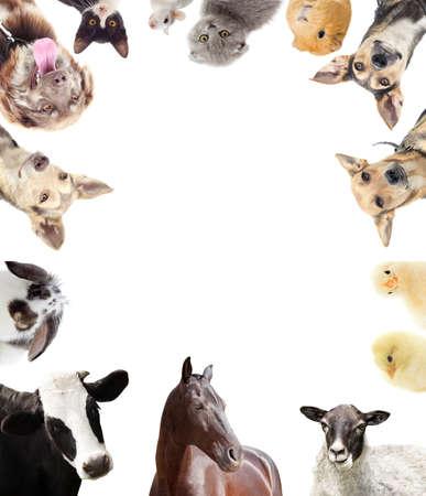 djur: uppsättning av husdjur Stockfoto