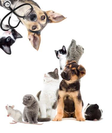 Mascotas están buscando, perrito y gatito veterinario Foto de archivo