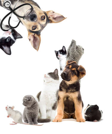 Pets are looking, Puppy and kitten vet