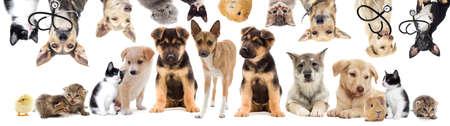mascotas set