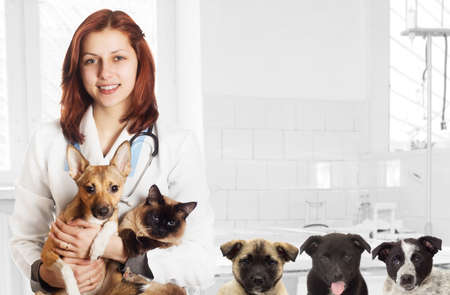 veterinary care: veterinarian and dog and cat at the clinic