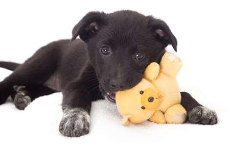 juguetes: Cachorro de juguete Juego