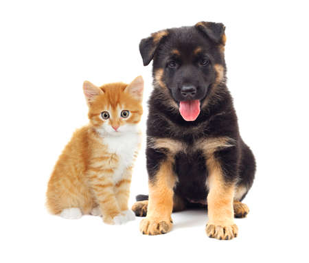 kitten and puppy looking, on a white background