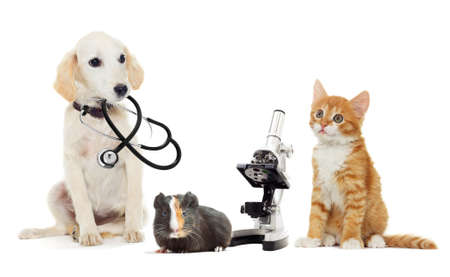 puppy and kitten vet
